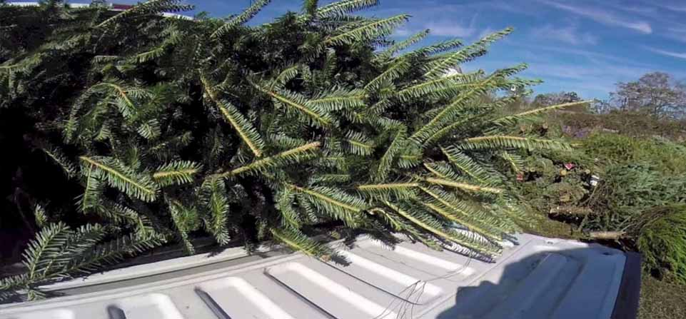 Recycle your Christmas tree at Calverton and raise money for British Legion