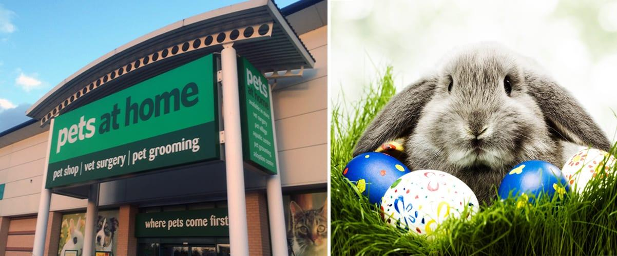 Pets at Home to stop selling rabbits over Easter at Arnold and Netherfield stores