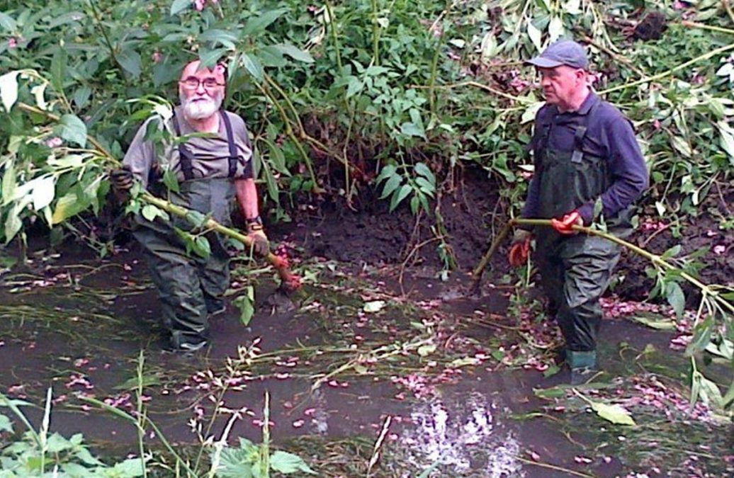 People needed for 'balsam bashing' at Netherfield Lagoons