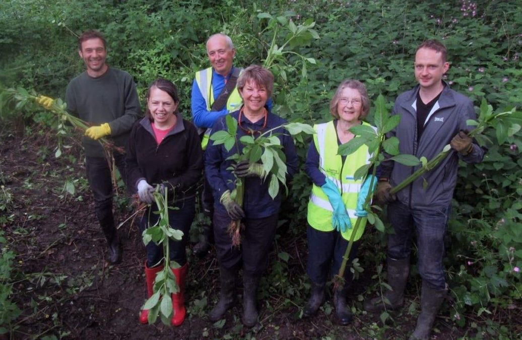 'Balsam bashers' continue fight to stamp out alien species of superweed from borough waterways