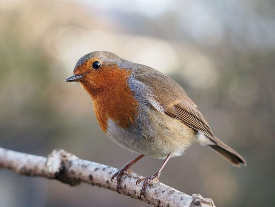 Join in with the Big Garden Birdwatch event at Gedling Country Park