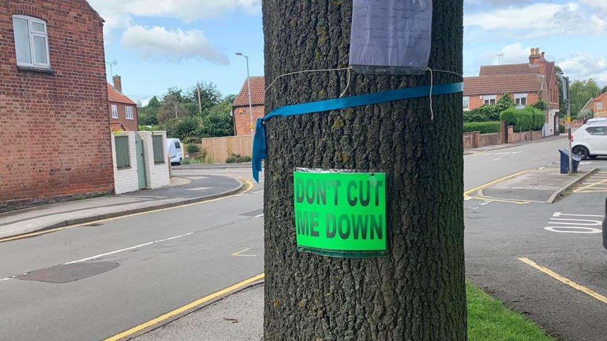 Old tree spared the axe as revised crossing plans for Calverton get green light