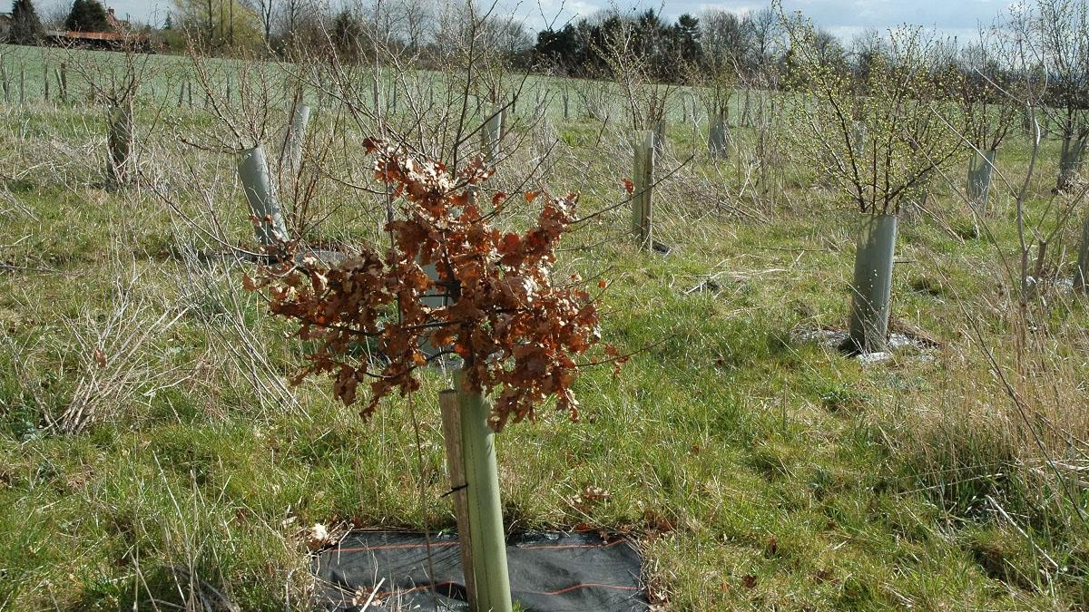 Gedling Access Road: 3,300 trees to be planted next to new bypass