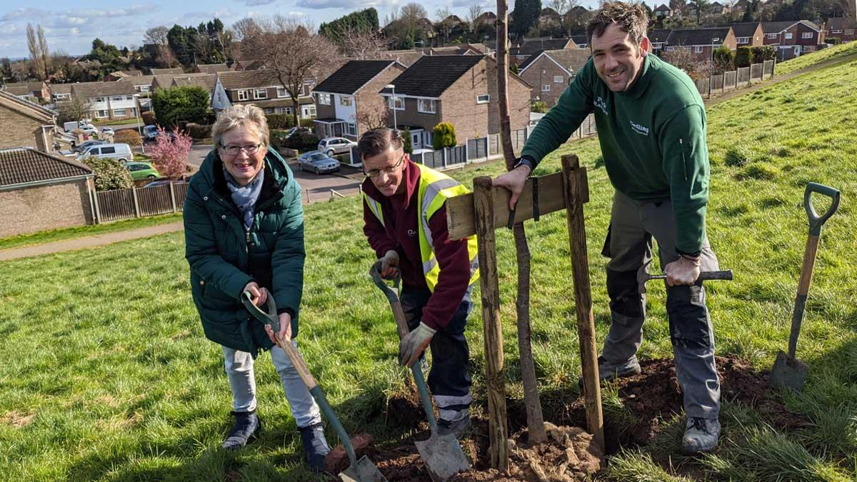 Trees planted on Carlton Hill